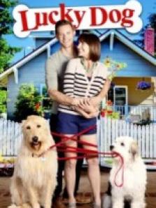 Sevimli Köpek (Lucky Dog) full hd film izle