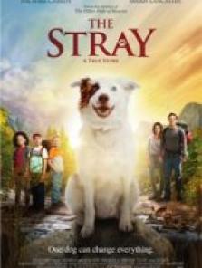 The Stray filmini izle 2017